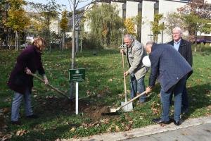 Засаждане на лирово дърво в района на НДК