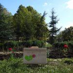 Розова градина в памет на донорите беше открита днес в центъра на столицата
